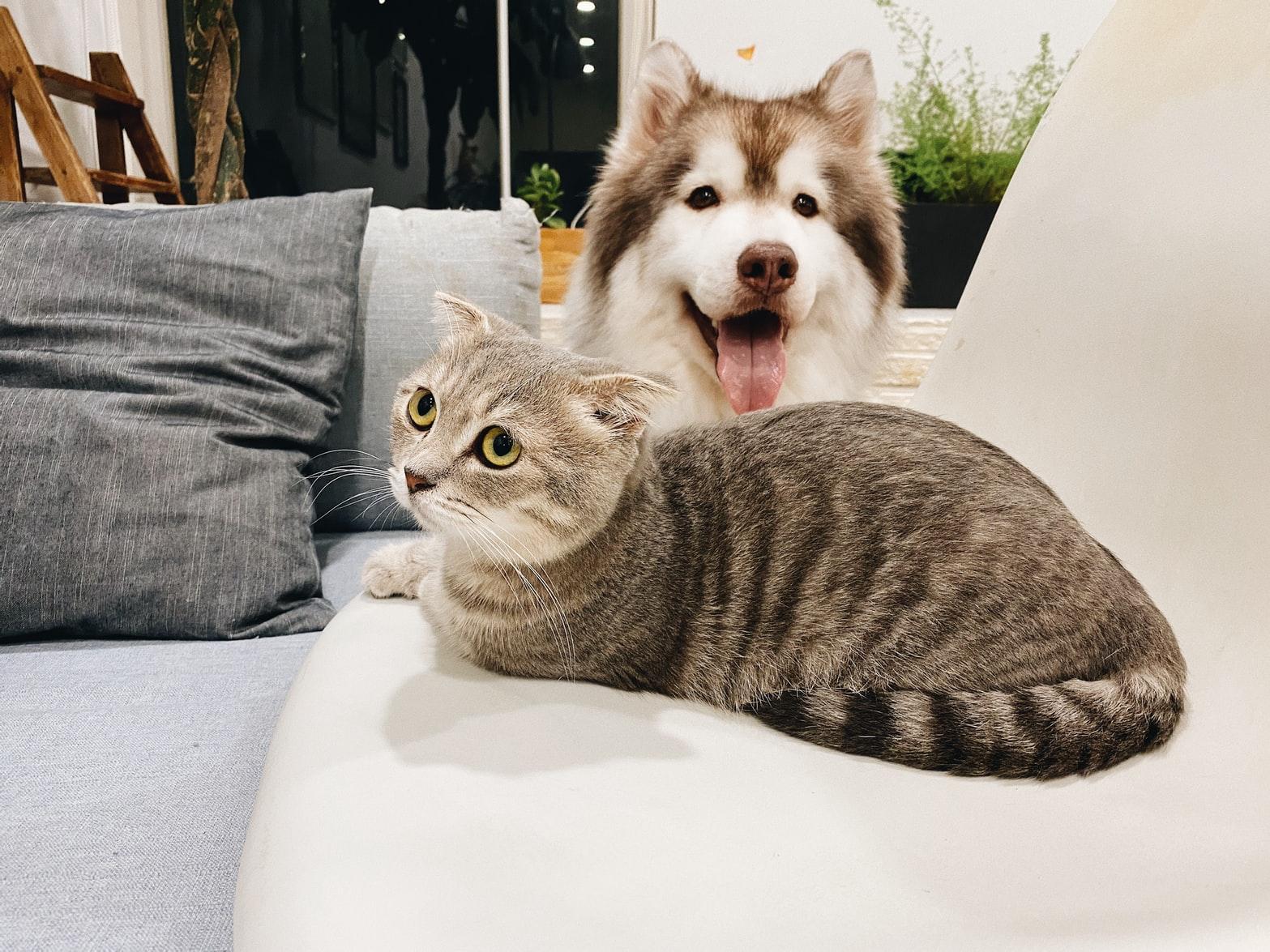 mascota y bebé