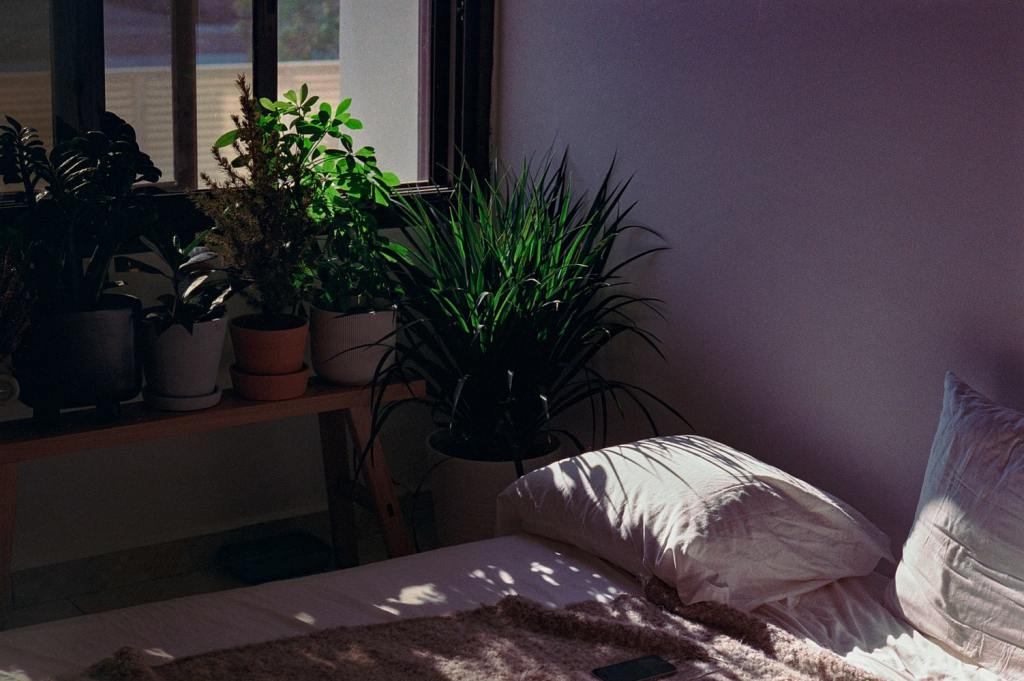 plantas en el cuarto
