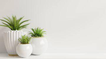 Las plantas dan vida a nuestro hogar. /Foto: Freepik
