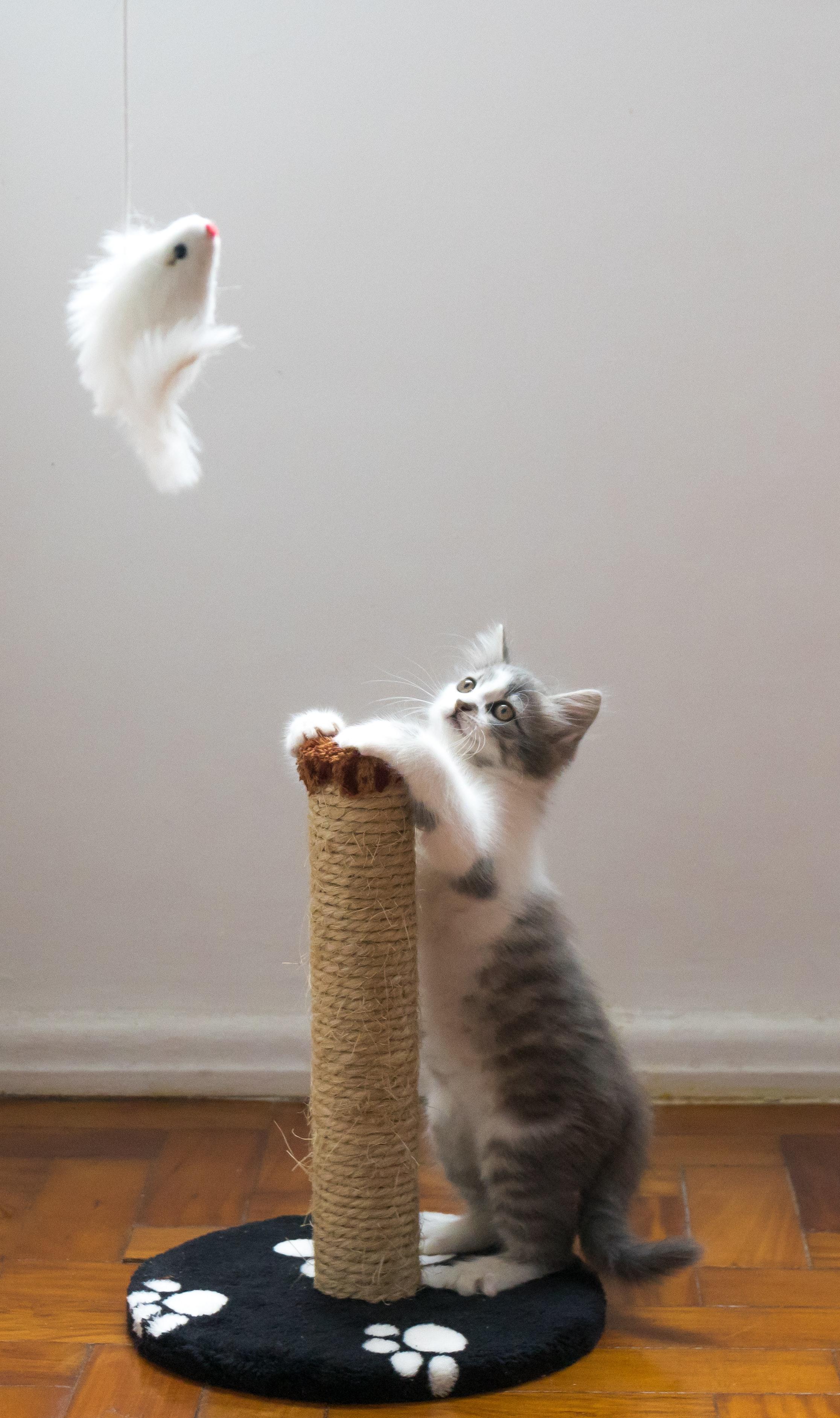 gato en el hogar