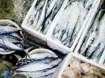 Pescados congelados