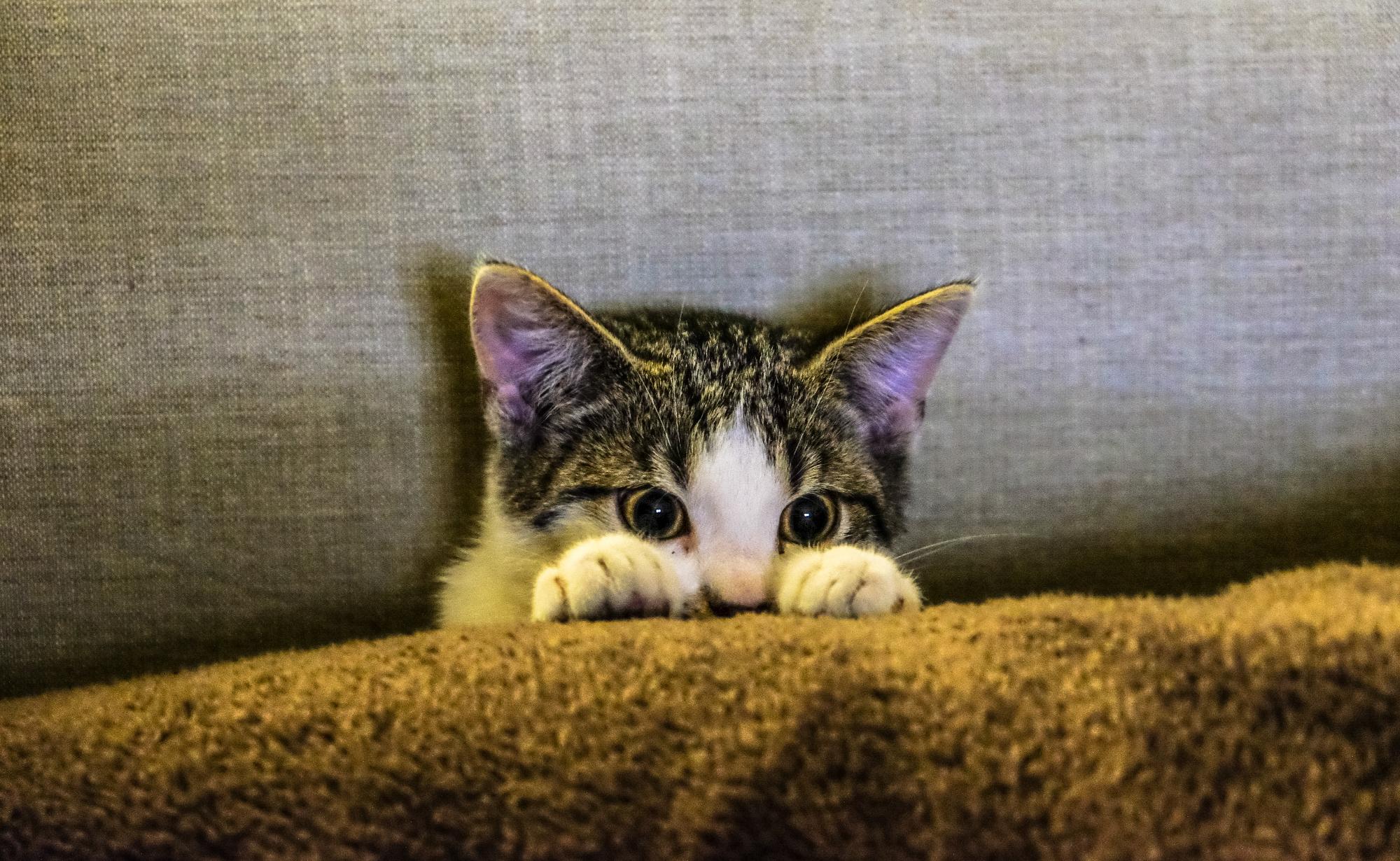 tener un gato en casa